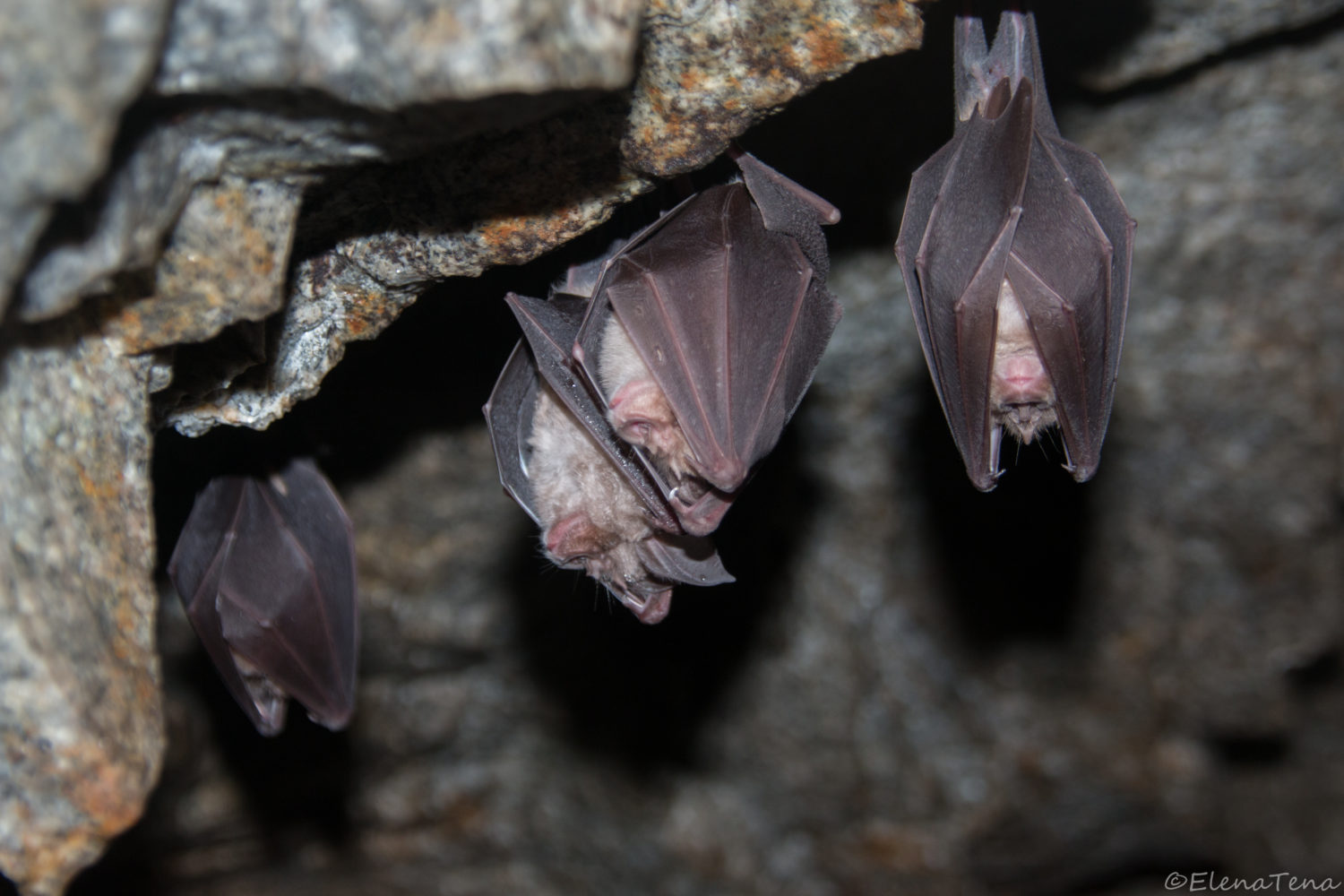 How Bats Relate To The Outbreak Of The Severe Acute